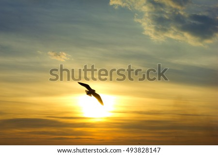 A bird Silhouette with a sunset sky background.