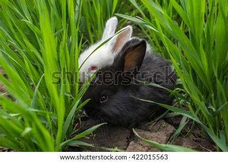 A black and a white rabbits are sitting in the green grass