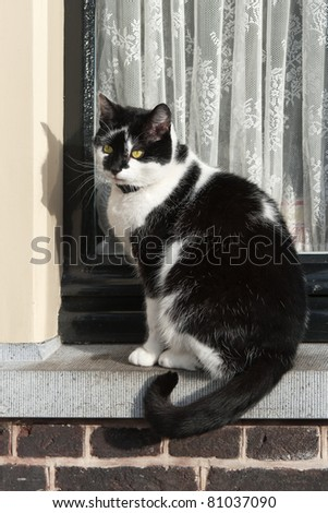 A black and white cat is sitting in front of a window waiting to get inside