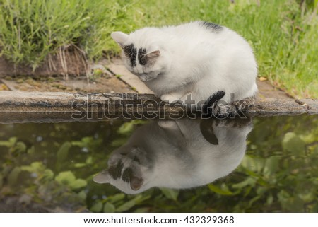 a black and white cat observed edge of the fountain sitting at her reflection in the water