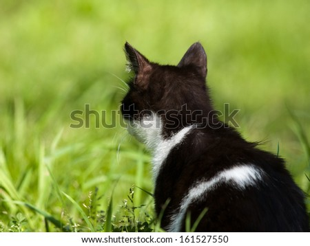A black and white cat staring into a green field of grass. - stock photo