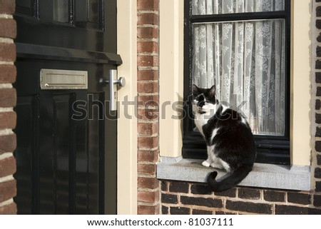 A black and white colored cat is sitting in front of a window waiting to get inside - stock photo