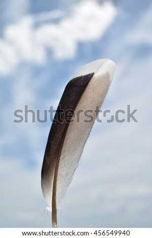 a black and white feather against a blue cloudy sky
