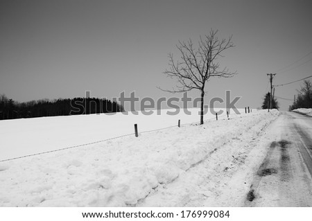 A black and white image of a solitary tree against a snow covered field and road in the winter in Connecticut. - stock photo