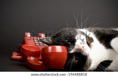 A black and white kitty lying near a red phone with the handle off its hook. - stock photo