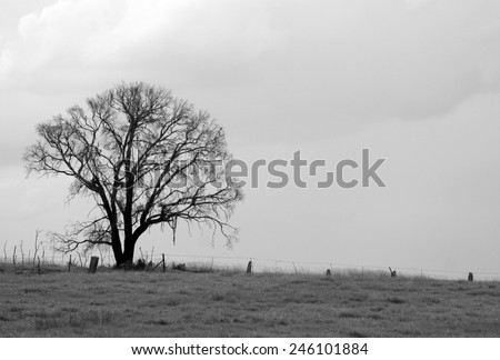 A black and white photo of a tree in a rural field. - stock photo