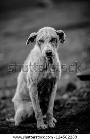 A black and white photo of an abandoned dog - stock photo