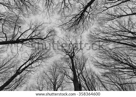 A black and white photo of trees in a forest with a perspective of looking up into the sky and isolate to see only the stem and branches of the trees in Europe with a fine art vintage frame