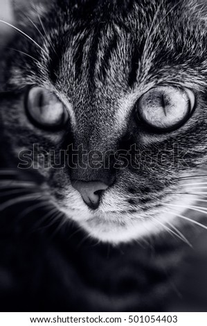 A black and white portrait of a beautiful eyed tabby cat.