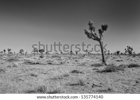 A black and white shot of looking into Joshua Tree National Park