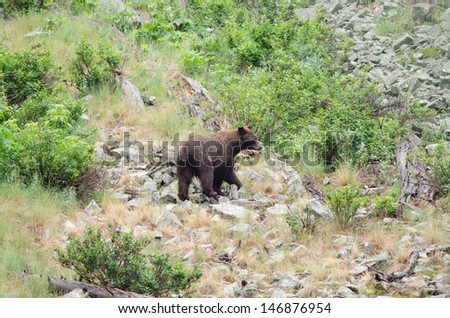 a black bear standing in a rocky mountain side - stock photo