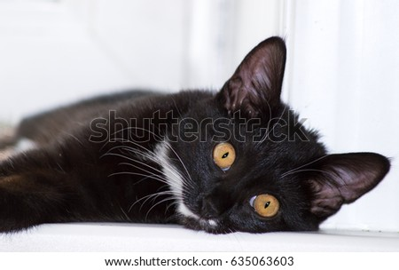 A black cat lying window sill