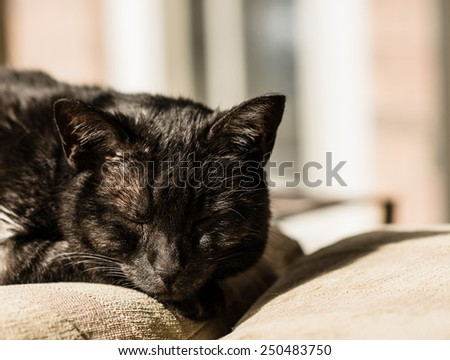 A black cat sleeps on a chair on a warm sunny afternoon - stock photo