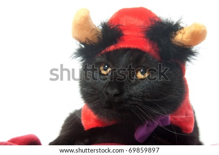 A black cat with a devil hat on for Halloween