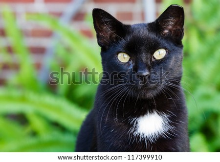 A black cat with a white spot and striking yellow eyes. - stock photo