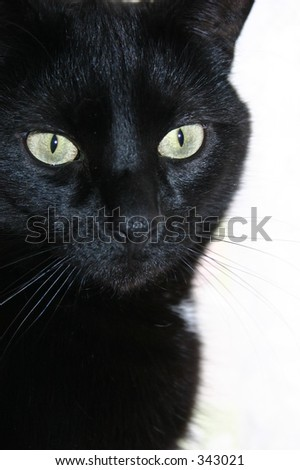 A black cat with green eyes on a white background.