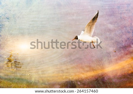 A black-headed seagull, Chroicocephalus ridibundus, is flying over the blue waters of the Dnieper river in Kiev the capitol of Ukraine - stock photo