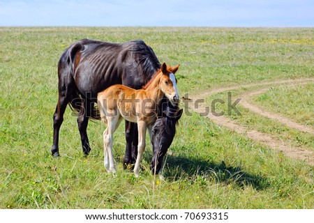 A black horse with a brown foal pasturing on the green lush meadow