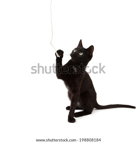 A black kitten plays with a rope and looks up. - stock photo