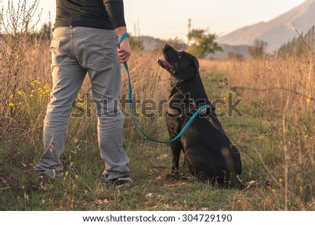 A black labrador is looking up at the owner waiting for commands. They are surrounded by a wild field. - stock photo