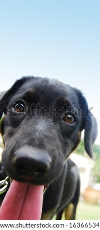 A black puppy showing his silly face - stock photo