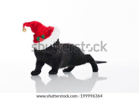 A black Tabby kitten wearing a red and white Santa hat. Shot in the studio on an isolated, white background. - stock photo