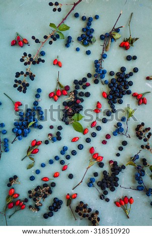 A blackberry plate over on a white wooden table. Medicinal and healthy plan and berries concept  Rustic style. - stock photo
