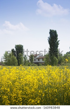 a blooming field with a country house in the background
