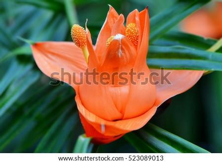 exotic flowers fotografie, snímky pro členy zdarma a vektory, Beautiful flower