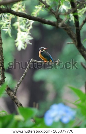 A blue and yellow kingfisher bird with a red beak perched on a branch. - stock photo
