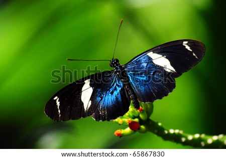 a blue butterfly over a flower - stock photo