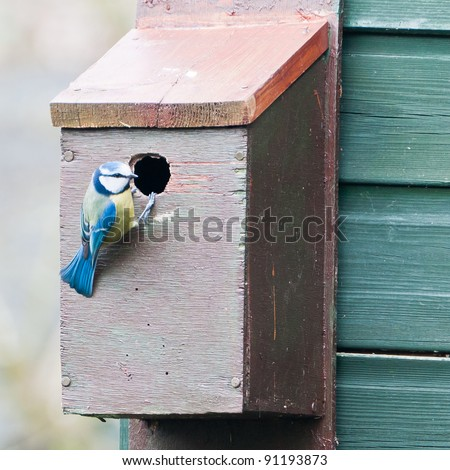 A blue tit inspects its new property.