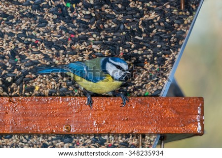 A blue tit on a bird feeder with various seeds - stock photo