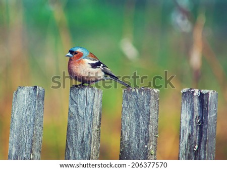 A bluebird sits on a wooden fencepost with blur green backdrop