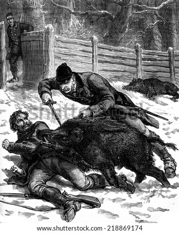 A boar hunt. One of the animals was thrown over a guard, vintage engraved illustration. Journal des Voyages, Travel Journal, (1879-80). - stock photo