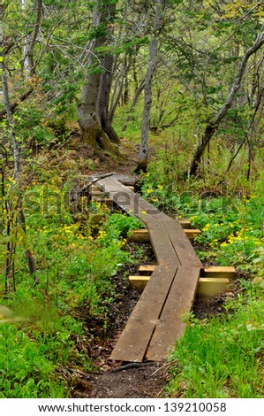 A board walk along the Appalachian Trail in Vermont with yellow spring flowers - stock photo