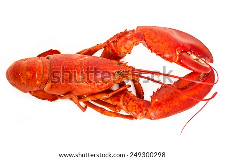A boiled lobster on a white background. - stock photo