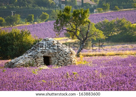"A Borie - dry-stoned ""house"", Sault region, Vaucluse, Provence, France - stock photo"
