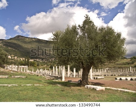 A bountiful olive tree among ancient ruins in Greece - stock photo