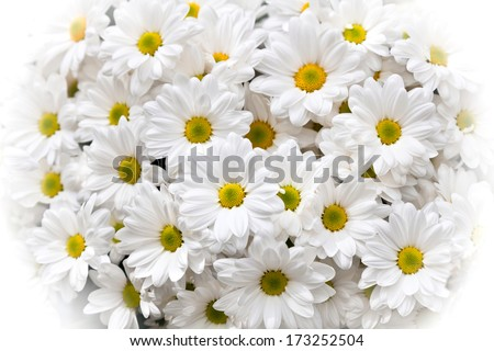 A bouquet of camomiles. Floral pattern. - stock photo