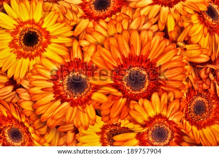 A bouquet of gerberas. Floral background. Floral pattern.