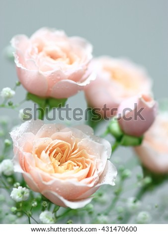 A bouquet of  Pink rose and Baby's-breath - stock photo