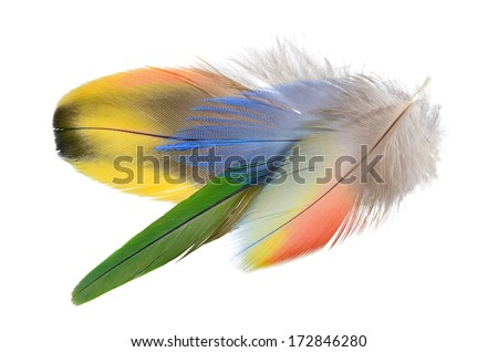 A bouquet of Real MACAW bird Feathers. Natural colors: Red, Yellow, Blue, Pink, Grey. Isolated on white background.   - stock photo