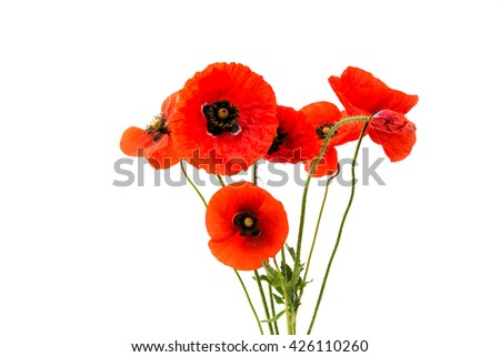 a bouquet of red poppies isolated on a white background
