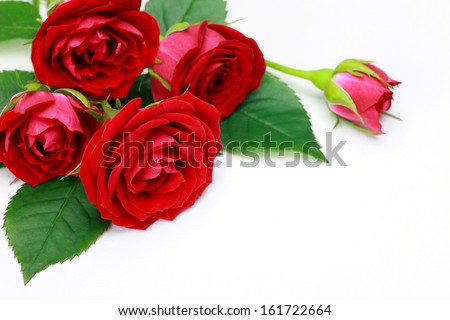 A bouquet of red roses on a bed of lush green leaves. - stock photo