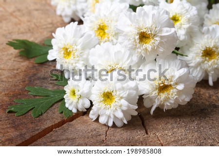 A bouquet of small white chrysanthemums closeup on a wooden board. Horizontal  - stock photo