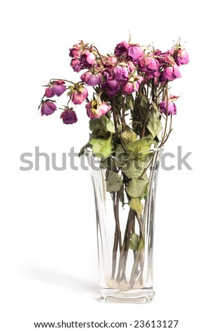 A bouquet of withered roses isolated on white.