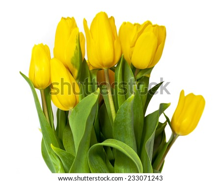 A bouquet of yellow tulips on white background