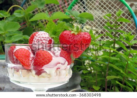 A bowl of strawberries and cream in front of a tub of strawberry plants and a mint plant  with tennis rackets in the background. - stock photo
