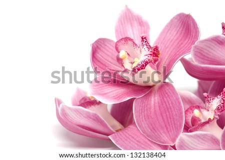 A branch of pink orchid